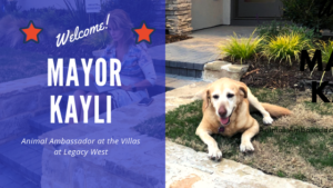 meet mayor kayli animal ambassador at the villas at legacy west plano texas