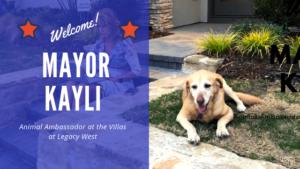 meet mayor kayli animal ambassador at the villas at legacy west plano texas